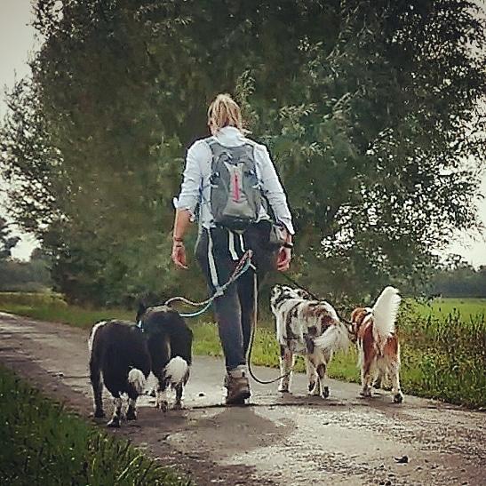 DOG WALK Learn & Fun